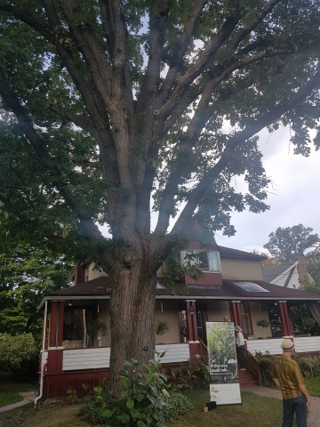 The Kot family's Bur Oak is estimated to be 180 years old.
